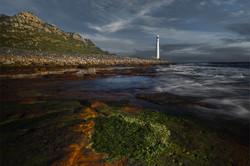 Algae patch-Donald Brotherston