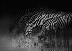 Misty Stripes-ANNEMARIE DU PLESSIS