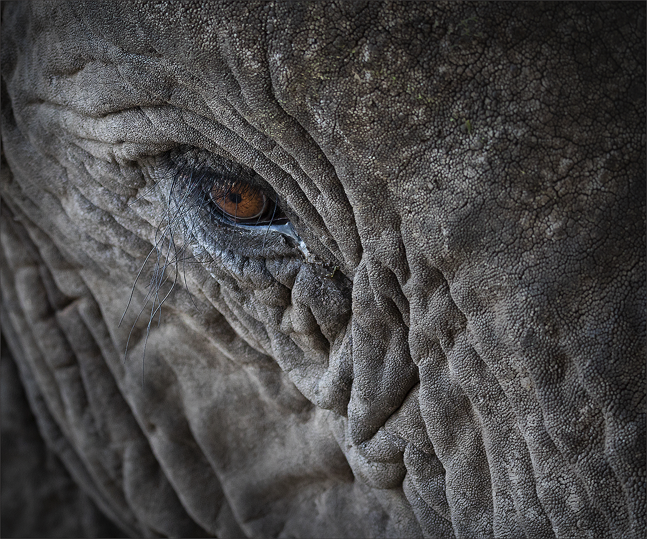 eye of the ellie-Gerrie Labuschagne