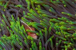 Nose Stripe in Green Anemone-Mark Geldenhuys