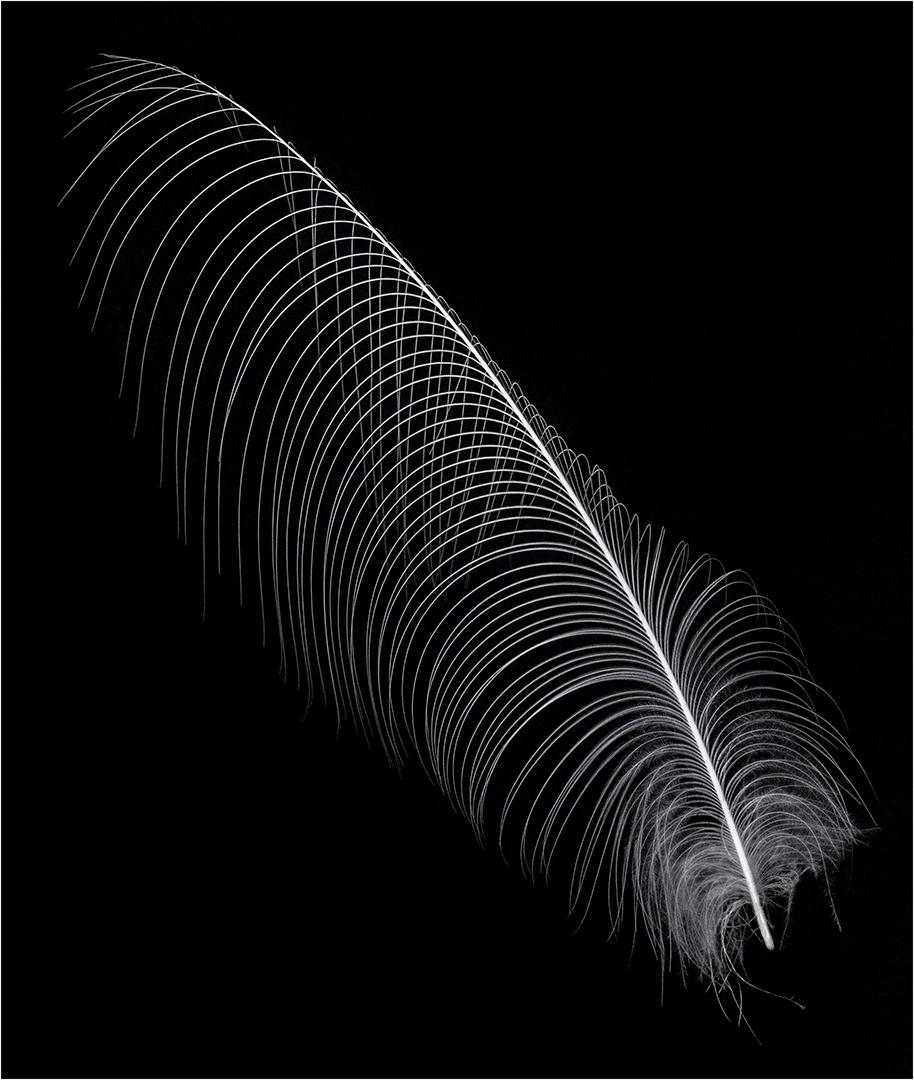 Filigree Feather-John Mills