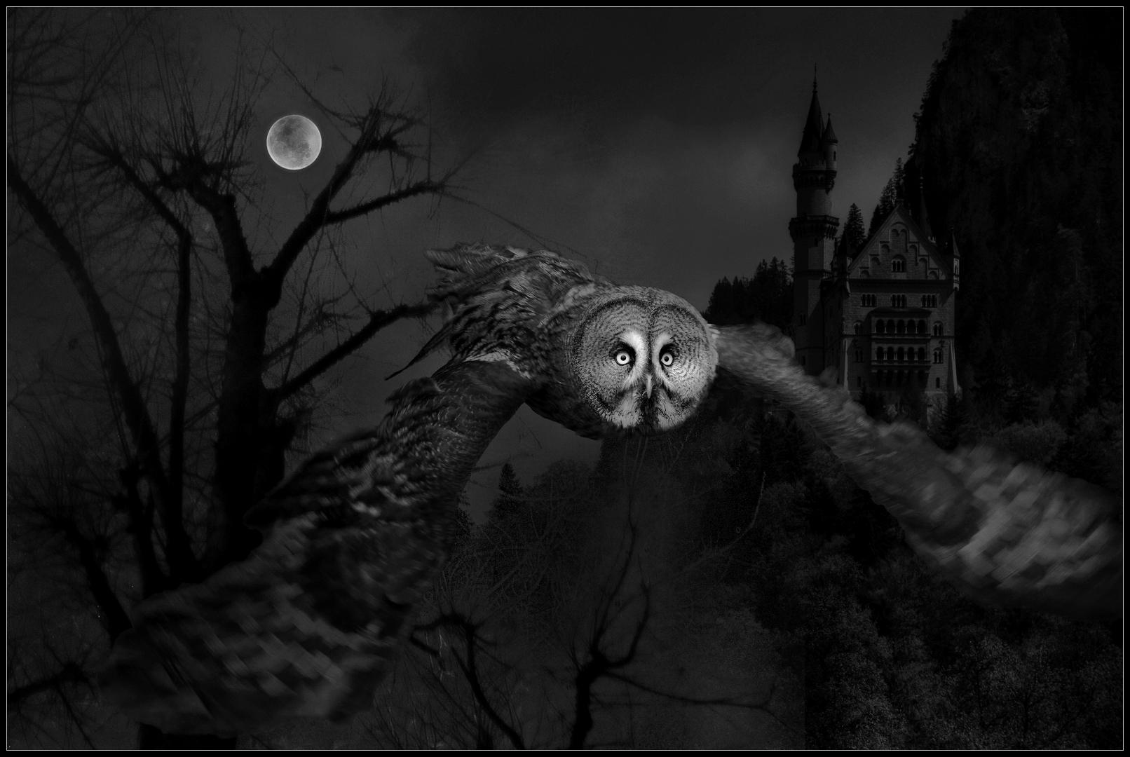 Silent Hunter-Michael Feistel