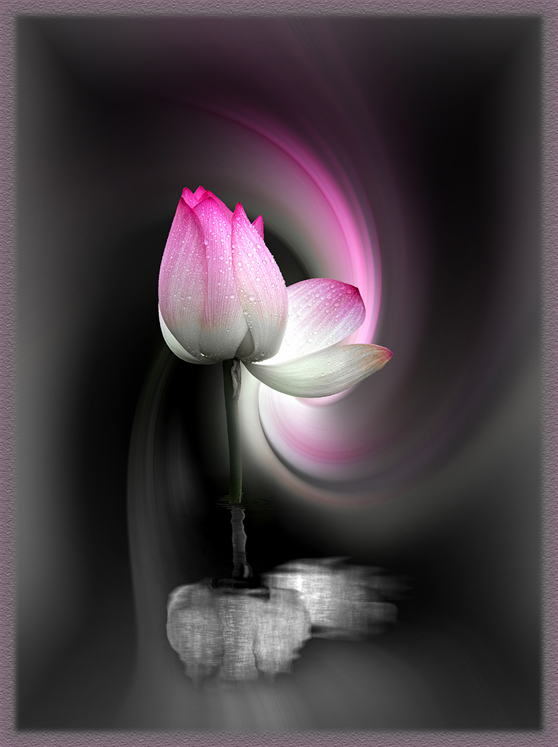 A Twist of Lotus-Chris Joubert