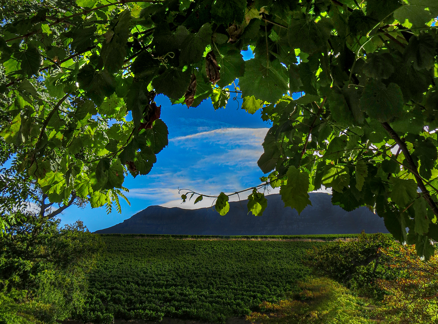 Window on Winelands-Debbie Evans
