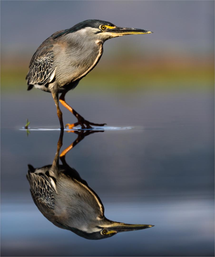 Mirrored Greenback-Annemarie du Plessis.