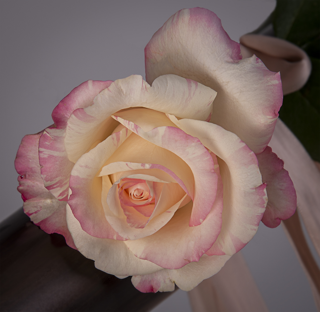 The Perfect Rose-Muriel Joubert