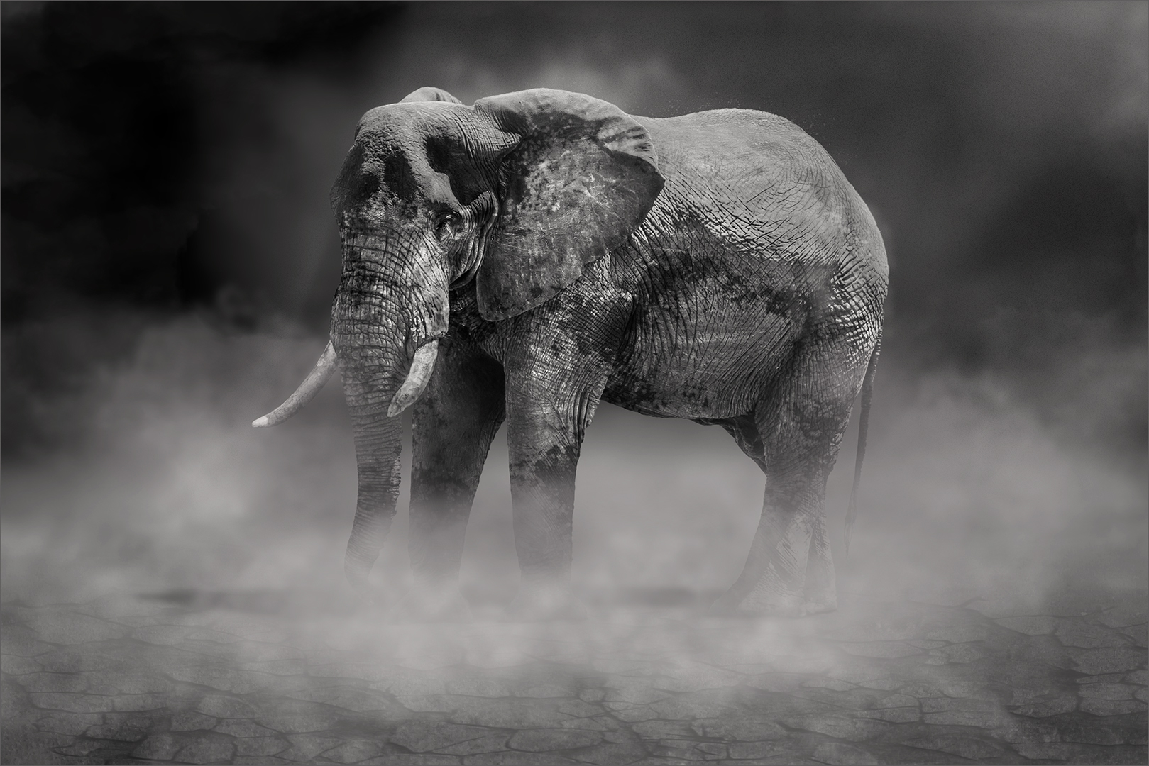 Taking a dust bath-Kobus Yssel