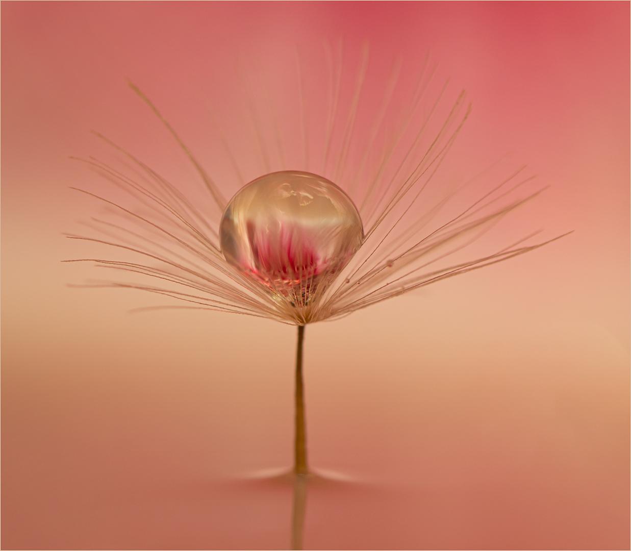 Dandelion Clock-John Mills