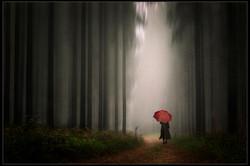 Forest Walk-Martin Barber