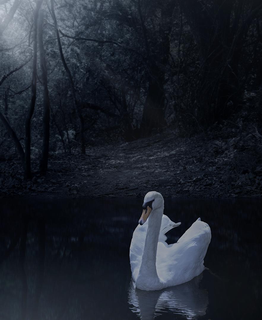 Moonlight Swim-Joey James