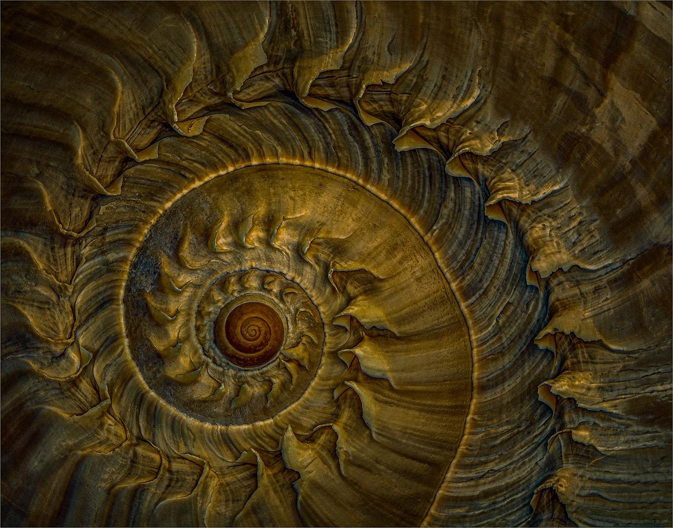 Spiral of Life-John Mills