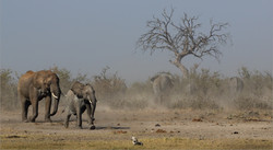 Out of the Dust-ANNEMARIE DU PLESSIS