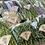 Thumbnail: ✦春の有機野菜ボックス送料込み✦(注!!東京•神奈川•千葉•山梨•群馬•埼玉•茨城•栃木の関東のお客様のみ対象)