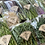 Thumbnail: ✦春の有機野菜ボックス送料込み✦(注!!関東以外のお客様対象)