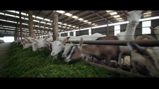 Dairy Goat Co-Operative > On The Farm
