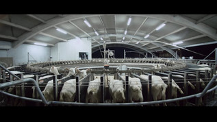 Dairy Goat Co-Operative > We Are From NZ