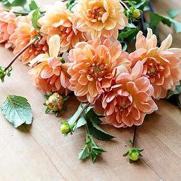 Peach-Dahlias_Social-Squares18-8.jpg