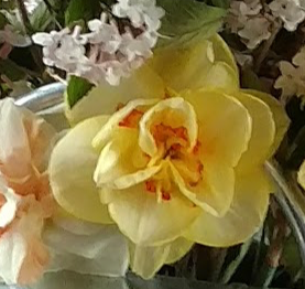 Cheerful Daffodil