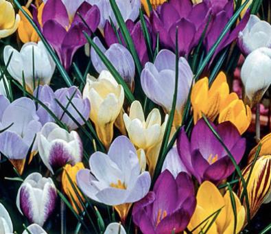 10 Early Spring Perennials