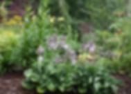 Regular garden weeding is part of our landscape maintenance.