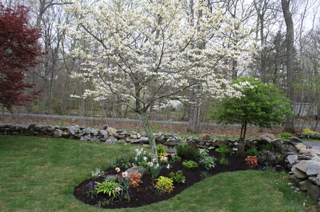 Delectable Dogwood
