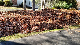 Seasonal cleanups are part of our landscape maintenance service.