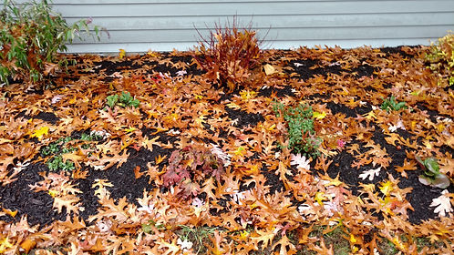 Fall Cleanup is part of landscape maintenance.