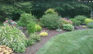 An beautiful garden with an appealing pathway
