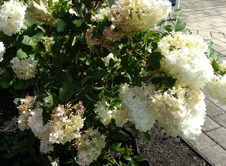 10 Long Blooming Shrubs For Summer
