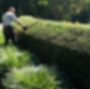 Shrub and hedge pruning are landscape maintenance services we offer.