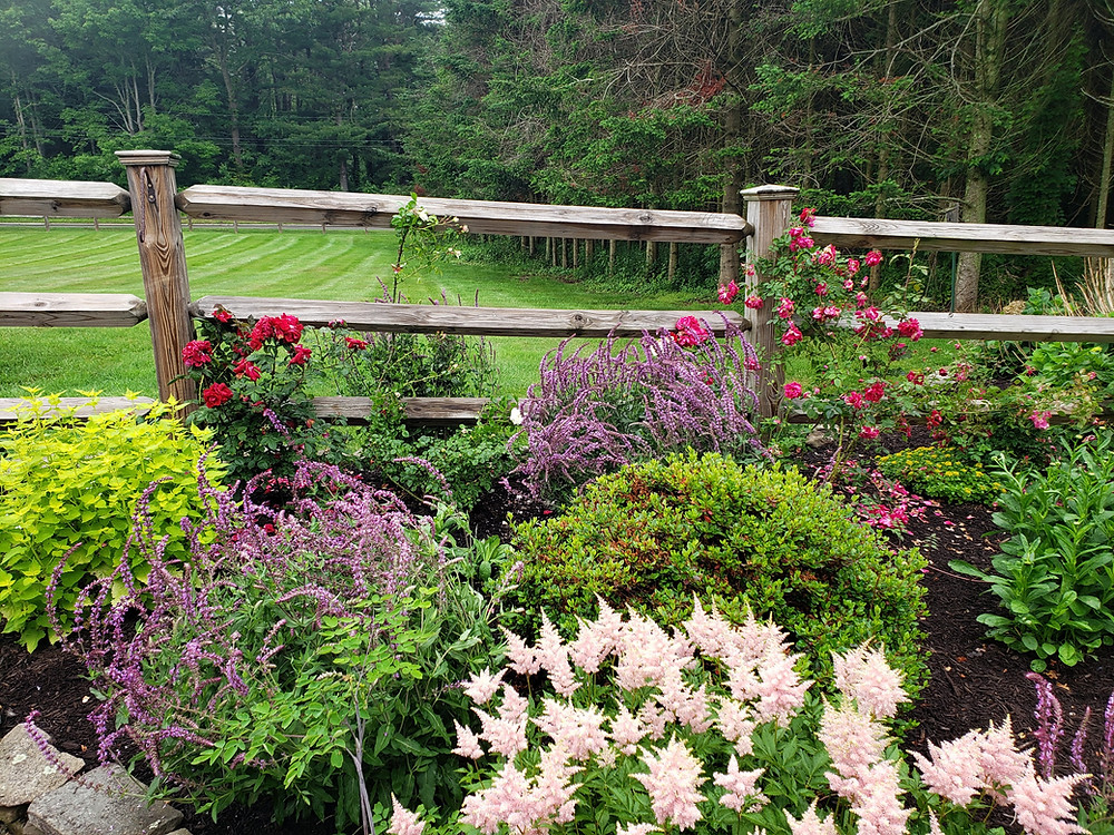 An informal cottage landscape in Durham, CT. Garden maintenance is critical to prevent overgrowth.