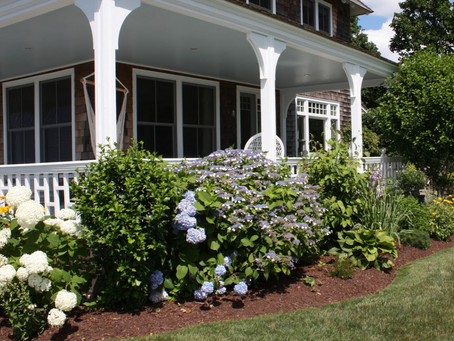 5 Tips For Growing Hydrangeas