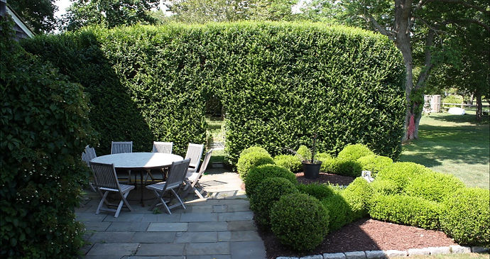 Complex hedge pruning and shearing are part of our landscape maintenance service.