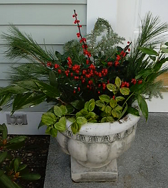 A beautiful Christmas container adds beauty to a front stoop.