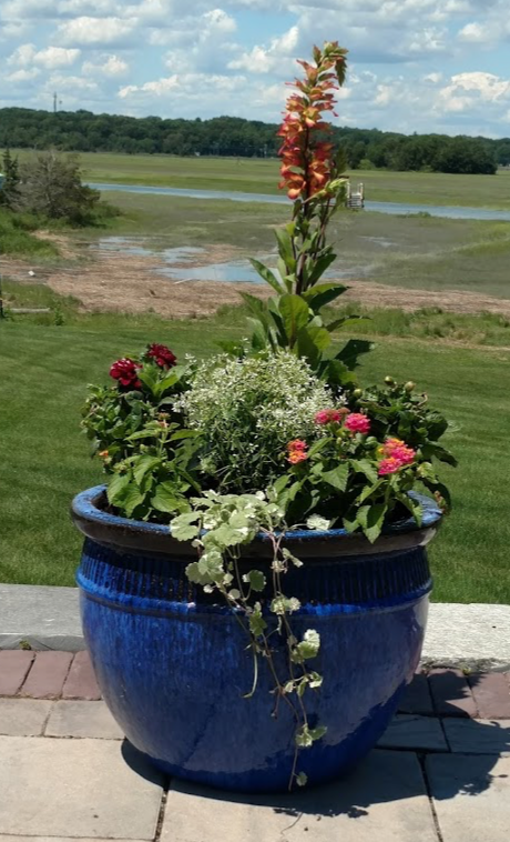 Annuals in pots are a great way to add color to your landscape