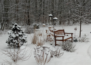 Snow Coated Landscape