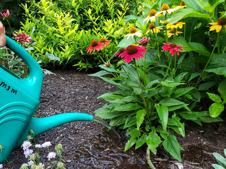 How To Beat Summer Stress In Your Garden