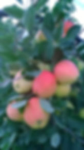 WhatsApp Image 2018-12-08 at 14.31.38.jp