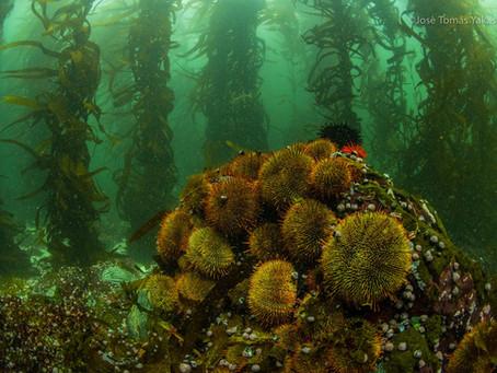Chile y la corriente de Humboldt: una de las corrientes más productivas del mundo.