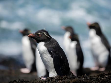 Pingüinos: grandes buceadores del Hemisferio Sur.