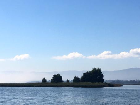 ¿ Es al azar la distribución de las especies vegetales en humedales costeros a lo largo de Chile?