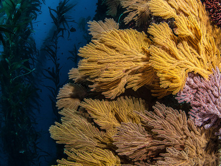 Corales: reliquias del océano.