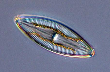 Fitoplancton: su estrecha relación con el oxígeno y poblaciones costeras.
