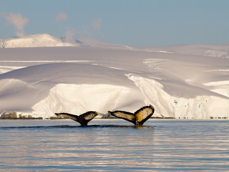 Hielo Marino Antártico: ¿está cambiando?
