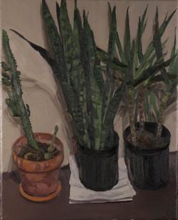 3 Plants,
