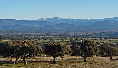 bois clairsemés – les 'Dehesas' - avec chênes verts et les montagnes de Gredos