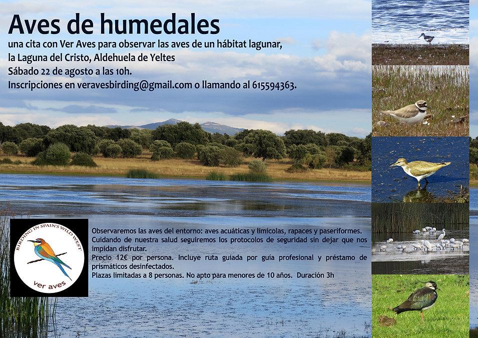 Aves-de-humedales.jpg