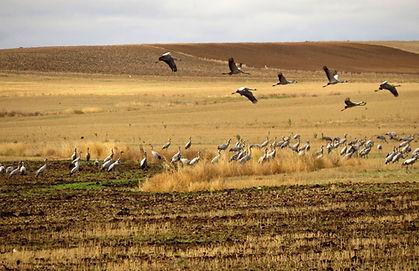 Cranes-in-cereal.jpg