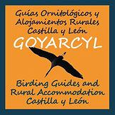 Guides ornithologiques et Hébergement Rural Castilla y Leon