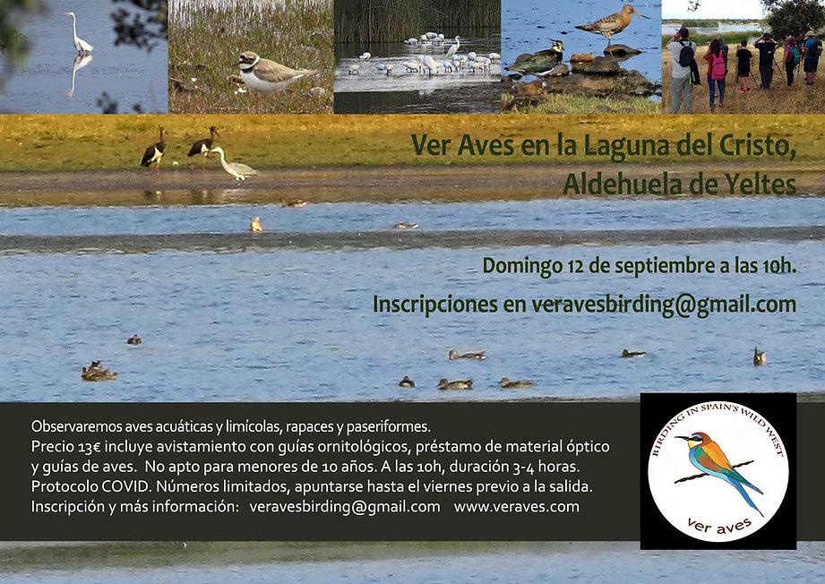 Aves-de-humedales-Ver-Aves-.jpg